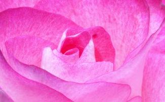 La revolución rosa