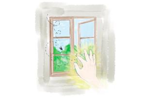 Una ventana a la Vida