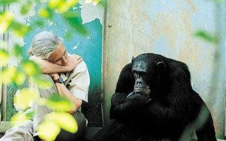"""JANE GOODALL: """"Estamos destruyendo el planeta porque perdimos sabiduría"""""""