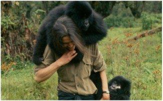 Una vida entre gorilas