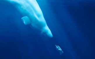 Día Mundial de los Océanos: cine para reflexionar y actuar