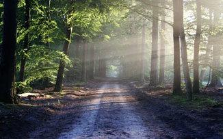 El camino del silencio