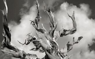 Los árboles, nuestros sabios gigantes