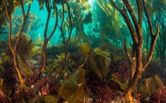 Paisajes asombrosos bajo el mar