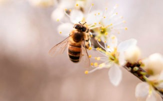 S.O.S abejas: ¿por qué están muriendo y cómo podemos salvarlas?