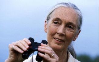 Jane Goodall: retrato de una mujer sabia