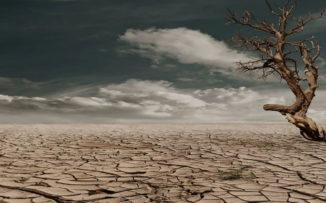 Semana del medio ambiente: la necesidad de sanar la Tierra
