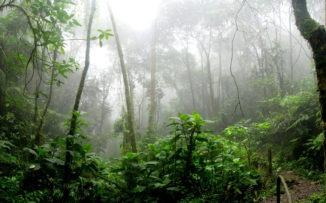 """""""La selva interactúa, siente, sufre, se regocija, da sus señales, responde y nos da lecciones"""""""