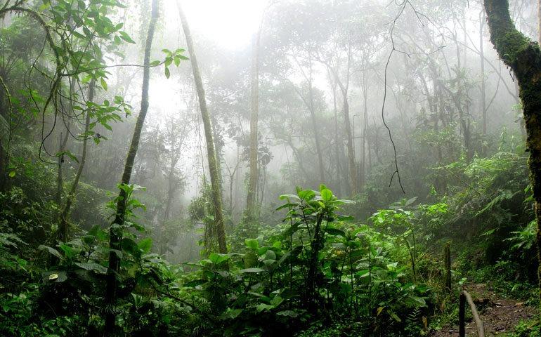 Amazonas-770x480.jpg