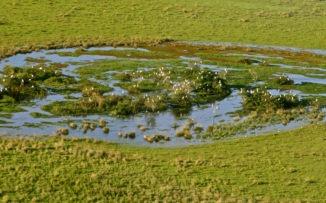 Gran Parque Iberá: un relato de agua, de tierra y de tiempo