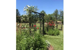 Una tarde a pura jardinería