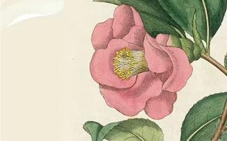 El simbolismo de las flores